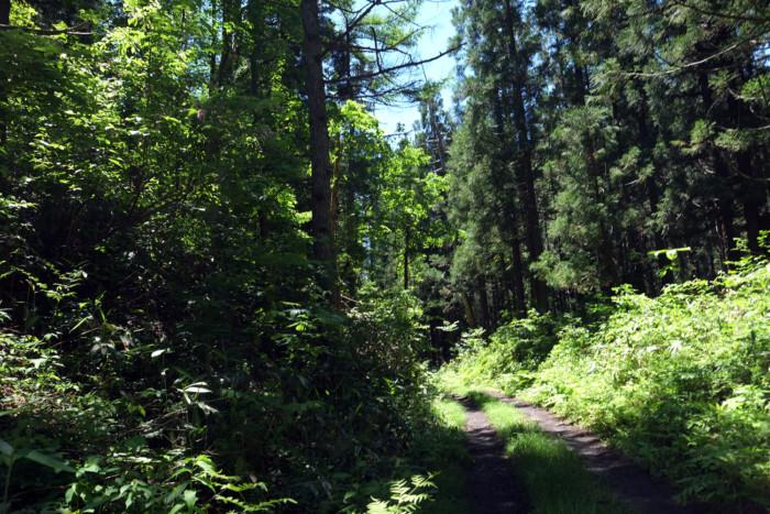 森の家 けもの道