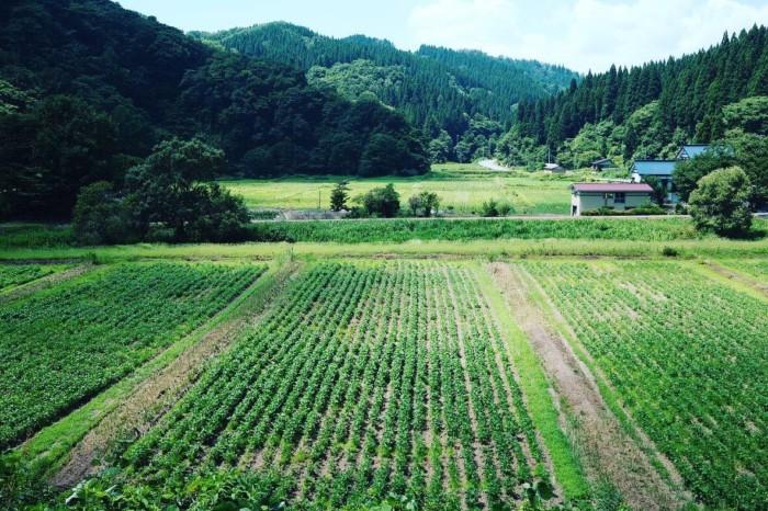 大豆 有機栽培