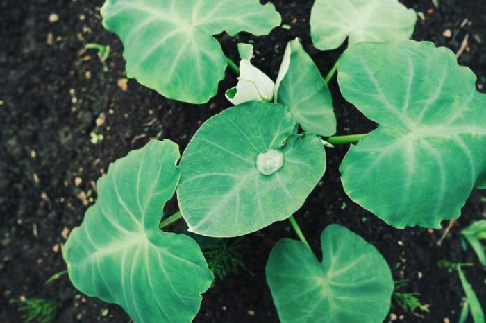 有機栽培 野菜